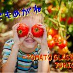 子どもメガネ⑧ トマトグラッシーズ ジュニア