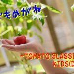 こどもメガネ⑨ トマトグラッシーズ キッズD